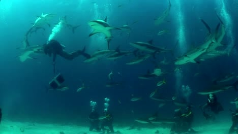 Good-footage-of-many-sharks-swimming-around-a-diver-underwater-1