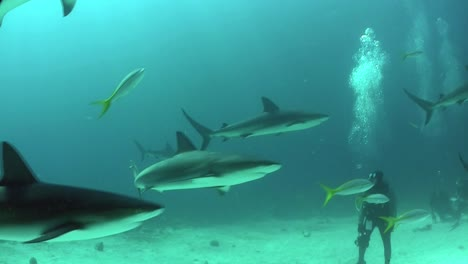 Good-footage-of-many-sharks-swimming-around-a-diver-underwater-2
