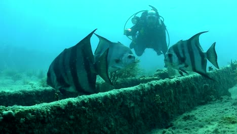 Fish-and-divers-swim-around-a-shipwreck