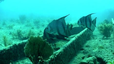 Fish-and-divers-swim-around-a-shipwreck-1