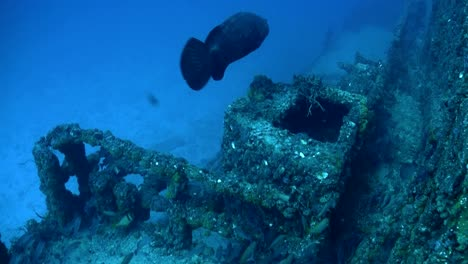 Fish-swim-around-a-shipwreck