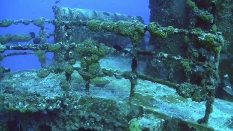 Fish-swim-around-and-colonize-a-shipwreck-1