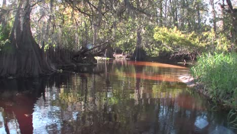 A-POV-shot-traveling-through-a-swamp-in-the-Everglades
