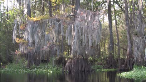 A-POV-shot-traveling-through-a-swamp-in-the-Everglades-1