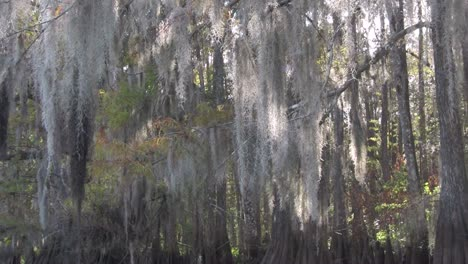 A-POV-shot-traveling-through-a-swamp-in-the-Everglades-showing-Spanish-moss