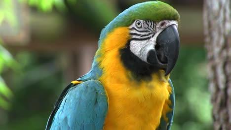 Un-Guacamayo-En-Una-Selva-Tropical
