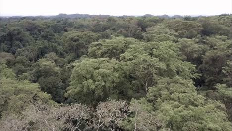 A-beautiful-aerial-over-the-jungles-of-the-Yucatan-in-Mexico