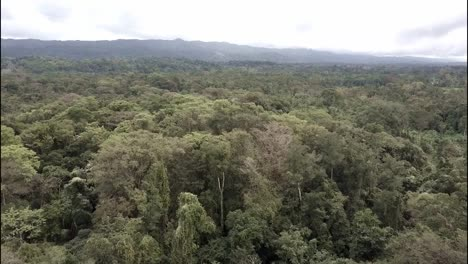 A-beautiful-aerial-over-the-jungles-of-the-Yucatan-in-Mexico-1
