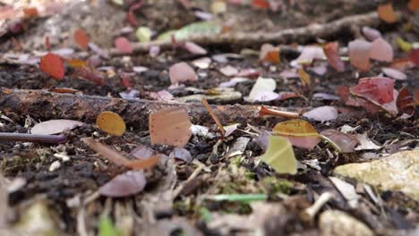 Leafcutter-ants-move-across-the-forest-floor-1