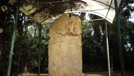 A-Mayan-stelae-sits-in-a-jungle-environment-in-Belize