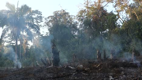 Slash-and-burn-agriculture-destroys-native-forests-in-the-third-world