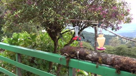 Hummingbirds-dine-at-an-outdoor-feeder