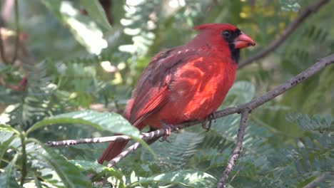 Close-up-of-a-cardinal-bird-sitting-on-a-branch-in-a-forest