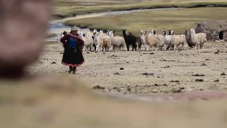 Alpakaherde-Und-Traditioneller-Dorfbewohner
