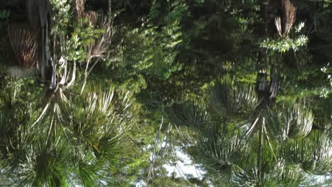 Rain-forest-reflection-on-rippled-water