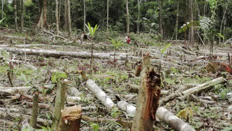 Trabajos-De-Tala-De-árboles-Desgaste-Ha-Sido-Talado