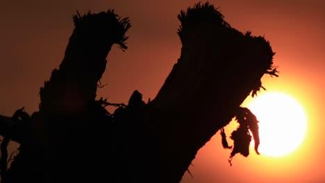 Sun-setting-through-branch