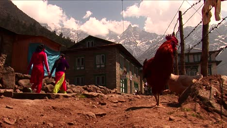 Gallos-En-Sendero-En-La-Aldea-A-Lo-Largo-De-Basecamp-Trek