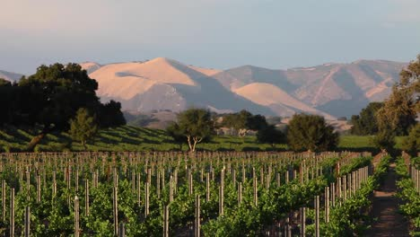 Magic-hour-light-on-a-beautiful-hill-and-vineyard-in-the-Santa-Ynez-Valley-AVA-of-CaliforniaÍs