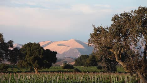 Magic-hour-light-on-a-beautiful-hill-and-vineyard-in-the-Santa-Ynez-Valley-AVA-of-CaliforniaÍs-1