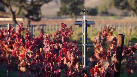 Selective-focus-shot-of-colorful-red-leaves-in-a-California-vineyard