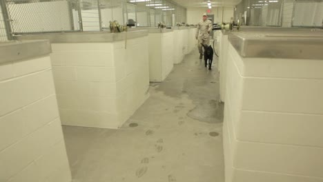 Working-German-Shepherd-Dogs-Are-Brought-To-A-Kennel-At-Night-2