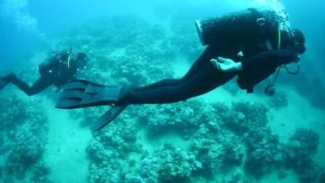 Divers-Swim-Around-Coral-Reefs-1