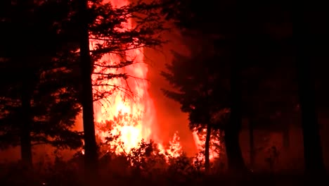 A-Huge-Forest-Fire-Burns-Trees-1