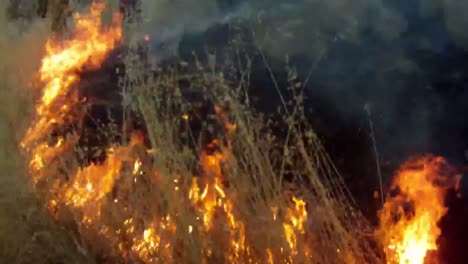 Firefighters-Fight-A-Forest-Fire-1