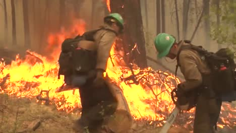 Firefighters-Fight-Forest-Fires-3