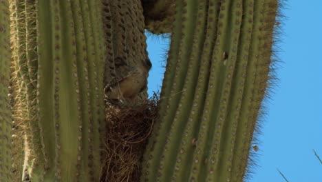 Bird-And-Cactus-Life-In-Saguaro-National-Park-In-Arizona