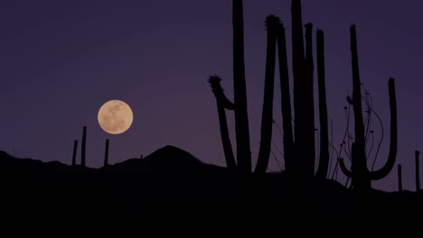 Creatures-Of-The-Night-Come-Out-In-The-Desert-Saguaro-National-Park-Arizona