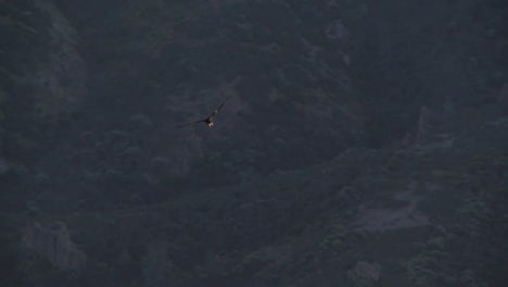 Condors-Soar-Over-Pinnacles-National-Park-In-California