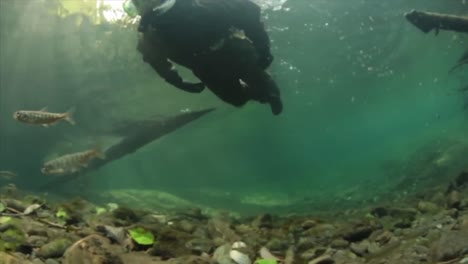 Researchers-Swim-With-Trout-And-Salmon-In-Various-Streams-And-Rivers
