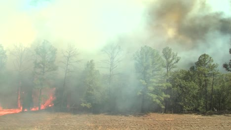 Time-Lapse-Of-A-Fire-Burning-Through-A-Field-And-Forest
