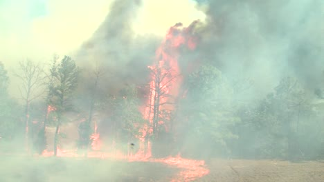 A-Wind-Whipped-Wildfire-Blows-Across-A-Field-And-In-A-Forest