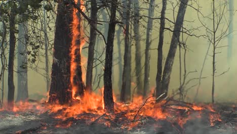 A-Wind-Whipped-Wildfire-Blows-Across-A-Field-And-In-A-Forest-1