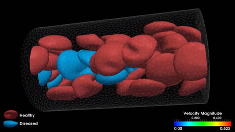 Various-Animations-Illustrate-The-Formation-Of-A-Blood-Clot
