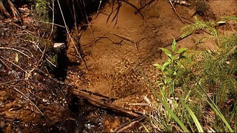 Primeros-Planos-Muestran-Un-Insecto-De-Agua-Maniobrando-Su-Camino-A-Través-De-Un-Arroyo-Un-Insecto-Alado-Se-Asienta-Sobre-Un-Registro