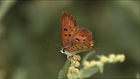 Closeups-Show-Butterflies-Dragonflies-And-A-Grasshopper-In-Nature