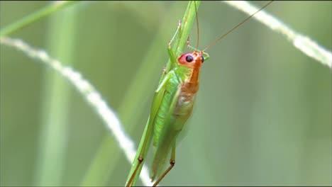 Los-Primeros-Planos-Muestran-Un-Saltamontes-Y-Un-Escarabajo-Atravesando-La-Naturaleza