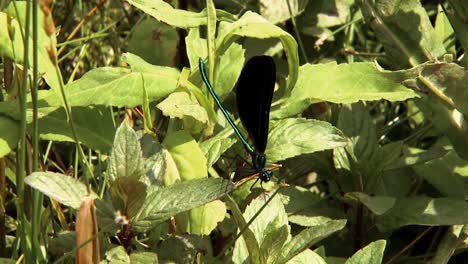 Closeups-Show-Dragonflies-Perched-On-Plants-And-Flowers