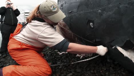 Marine-Biologists-Conduct-A-Necropsy-On-A-Beached-Gray-Whale