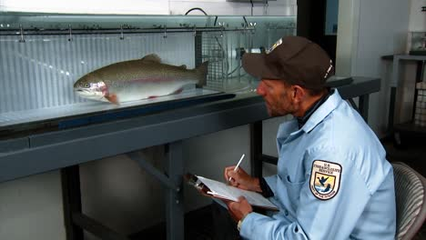 A-Scientist-With-The-Usfws-Observes-A-Cutthroat-Trout-At-The-Bozeman-Fish-Technology-Center