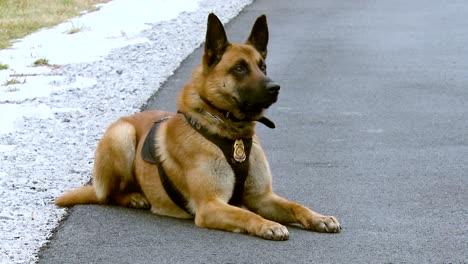 Ein-K9-Hund-Wird-In-Einem-Vermont-Feld-Verfolgt-Gefolgt-Von-Usfws-Beamten