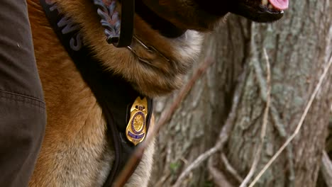 A-K9-Dog-Is-Trained-Outdoors-At-The-Silvio-O-Conte-National-Wildlife-Refuge-In-Vermont