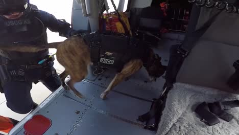 Us-Coast-Guardsmen-Conduct-Hoist-Training-With-K9-Teams-In-Southern-California