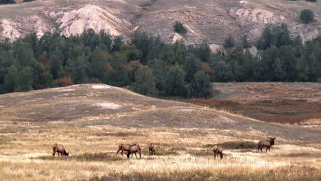 Alces-Pastando-Y-En-El-Mirador-En-La-Ladera-De-Una-Montaña