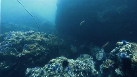 2019-Verfallene-Verrostete-Hummerfallen-Unter-Wasser-An-Korallenriffen