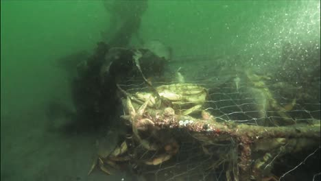 Crabs-In-Derelict-Cages-Off-The-Coast-Of-Alaska